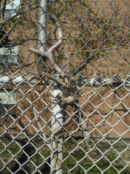 tree_in_tree