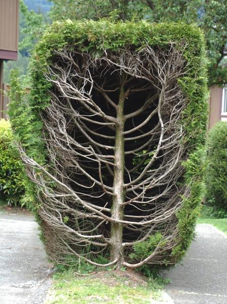 sm_bare_shrub
