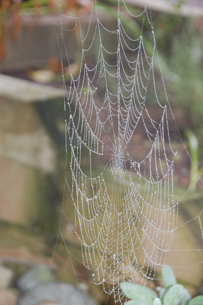sm_spiderweb03