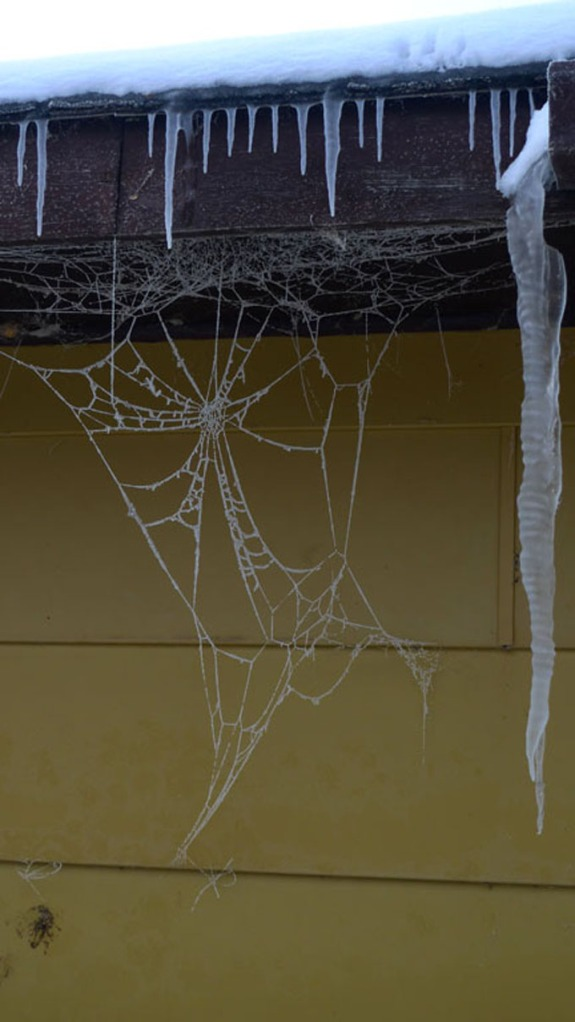 frozen spiderweb rural