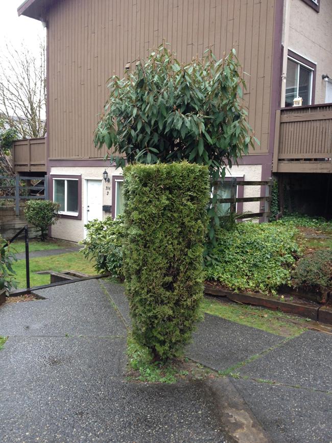 sm_double hedge