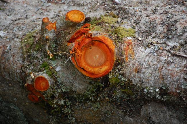 sm_orange_fungi