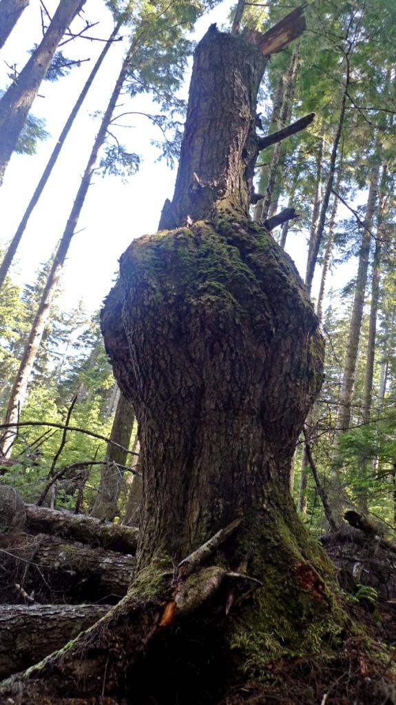 kerri_stump rural 3