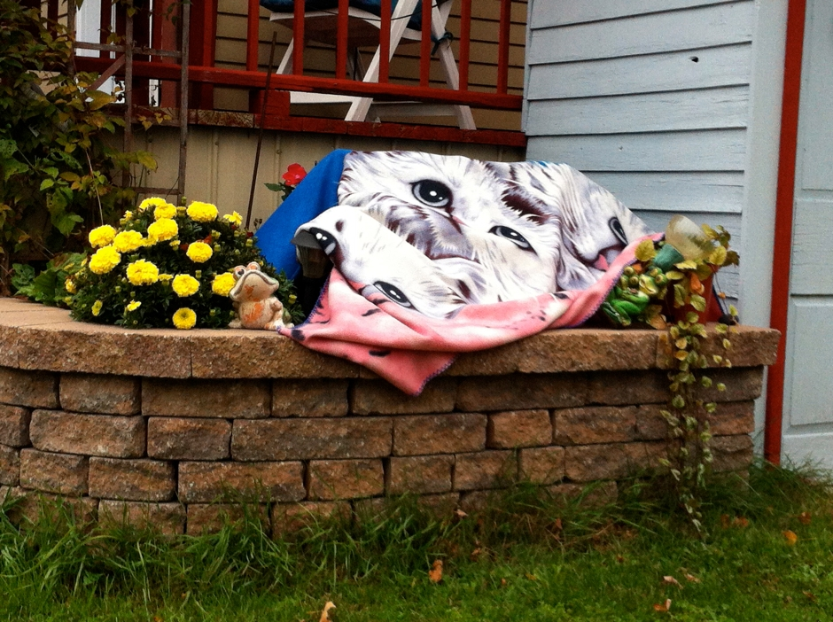 annie_cat_blanket