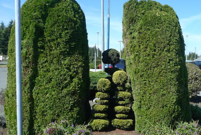 Kerri_shrubs rural