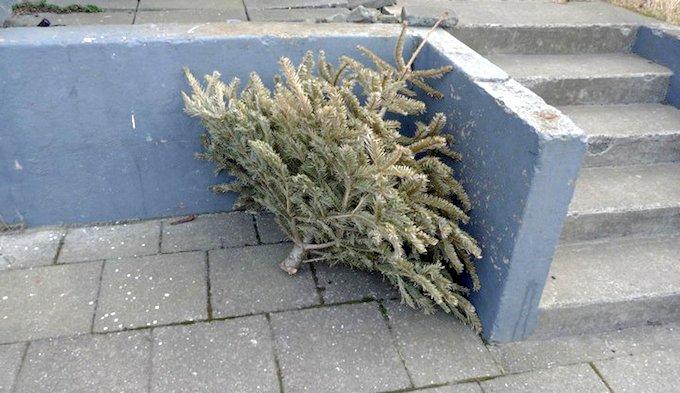 xmas tree 3 urban