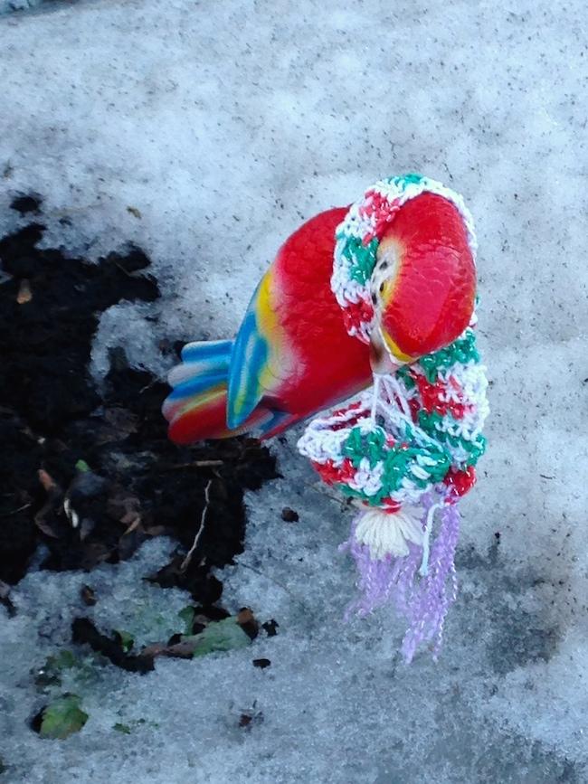 07Jennifer_bird with scarf