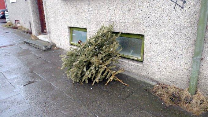 07kerri_01xmas tree 1 urban