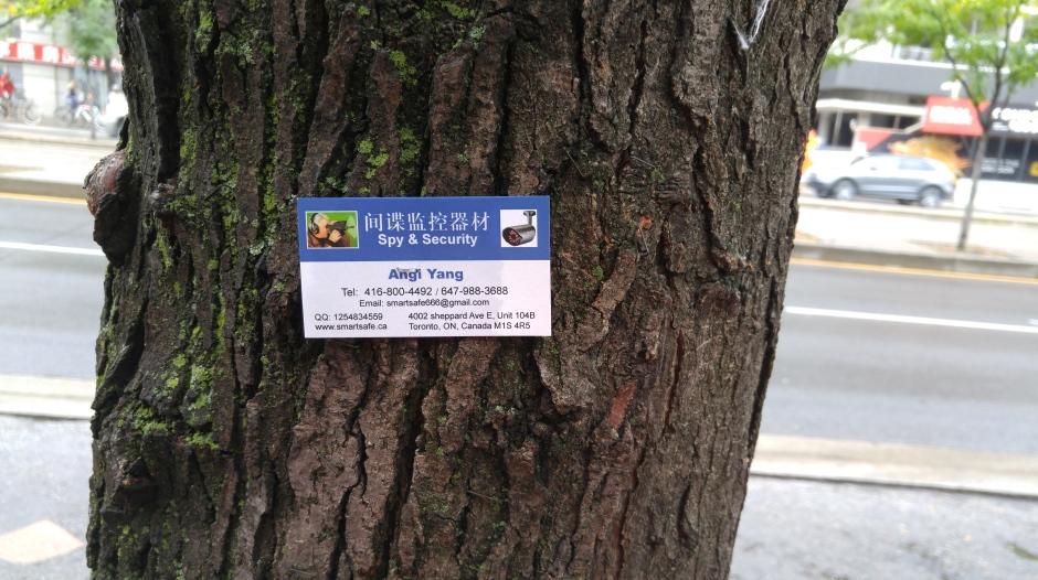 13BM_tree