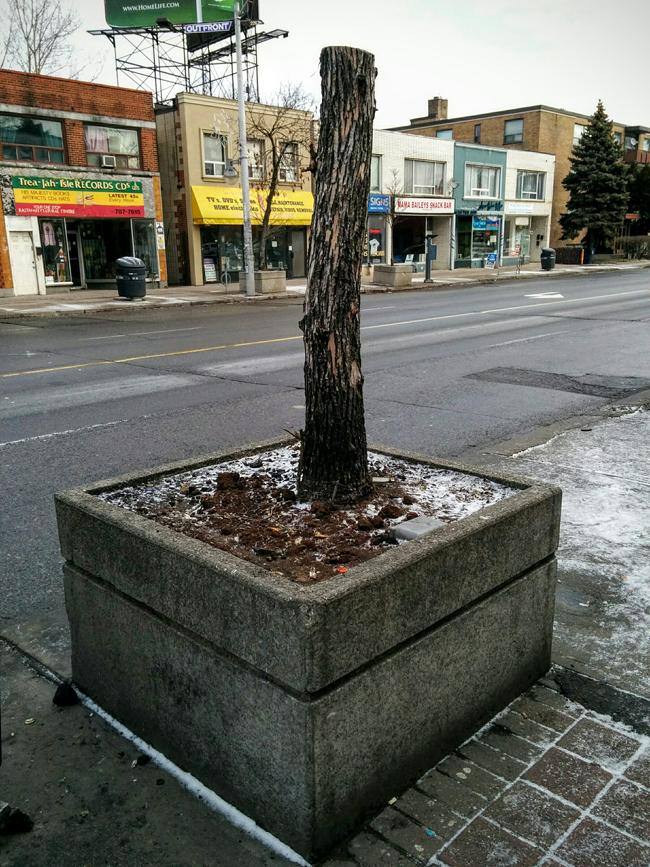 02SL_street_stump