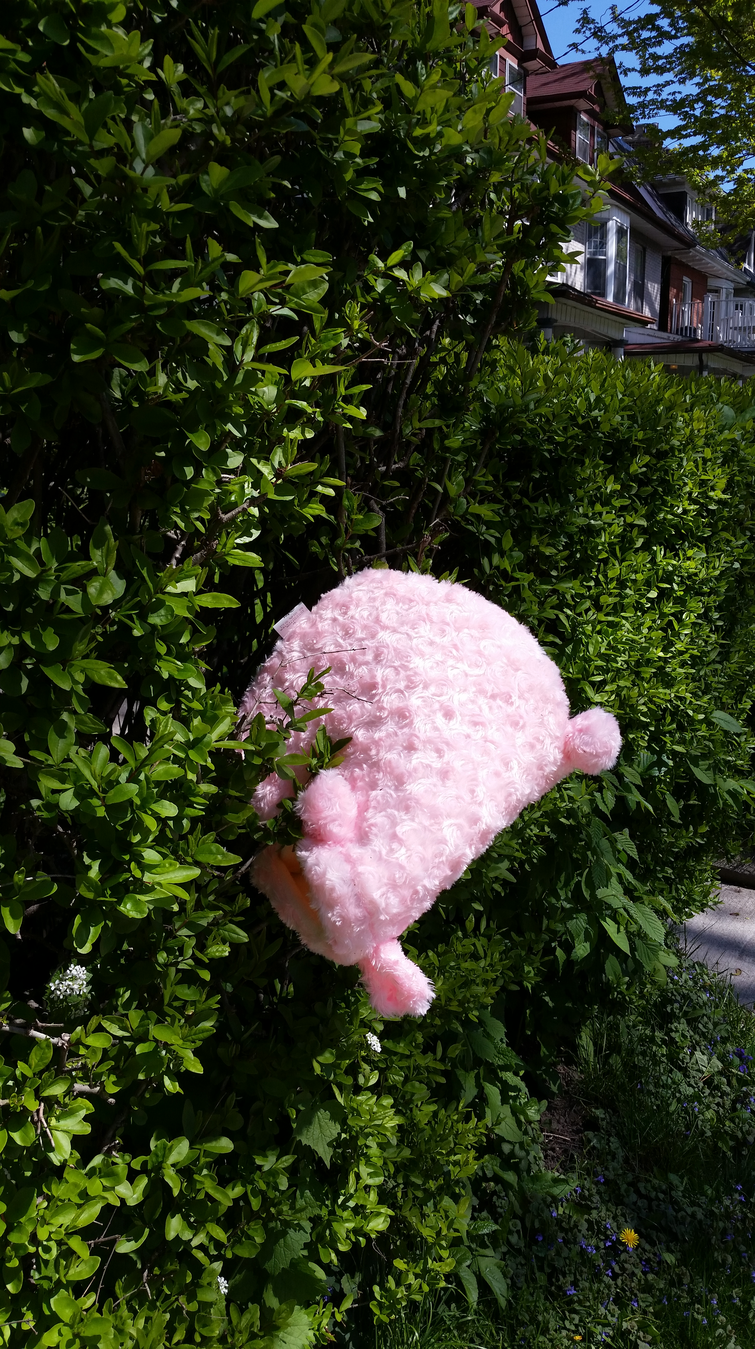 11Shalini roy_pink01.jpg