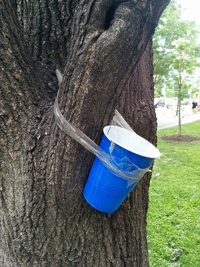 21_sl_beer-cup-squirrel-feeder