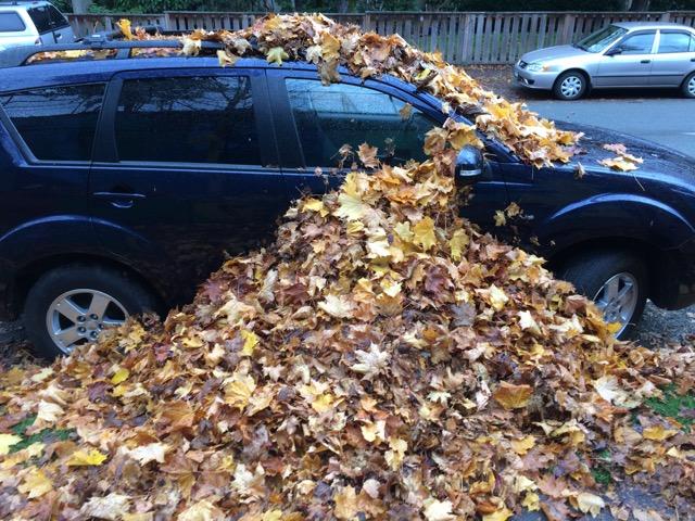 29_103 New Leaf-GS