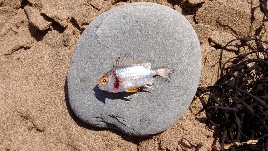 10_Isabellezab_fish