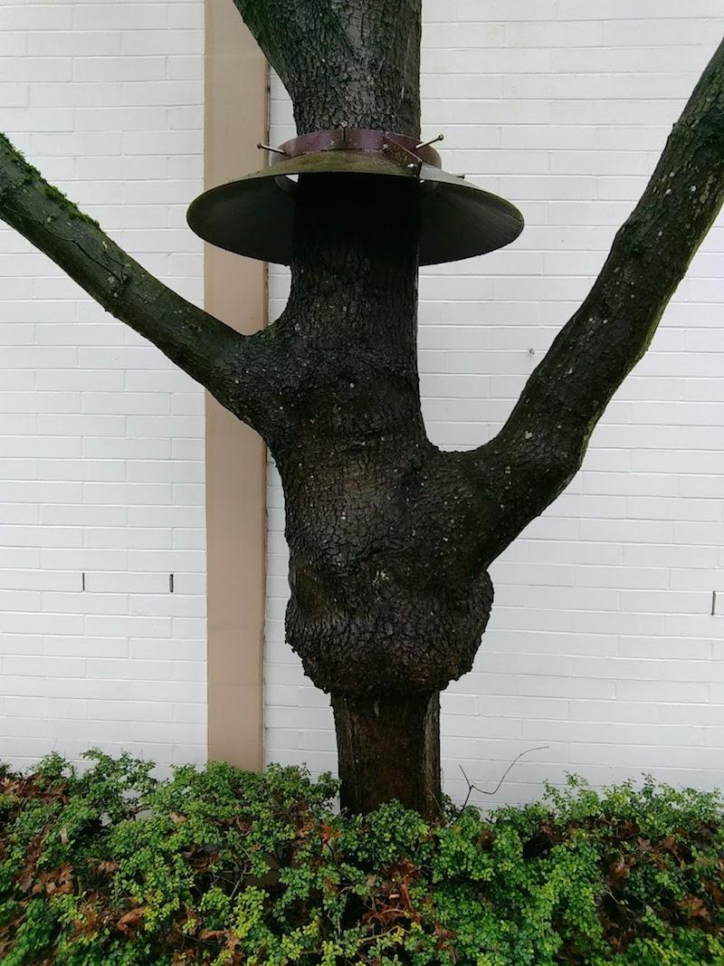11_BL_treehat