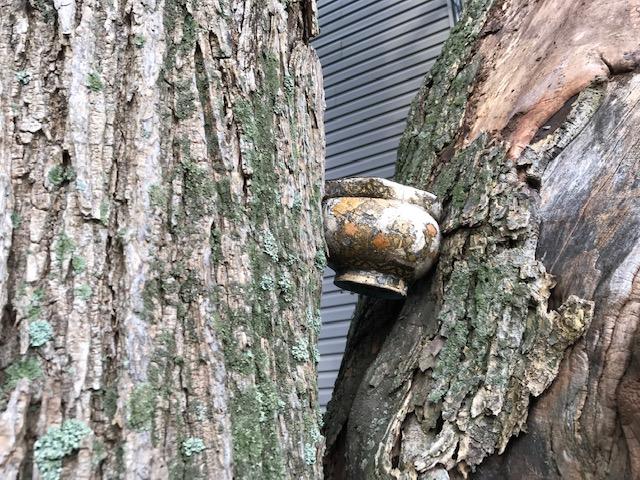24_Barbara_pot_tree