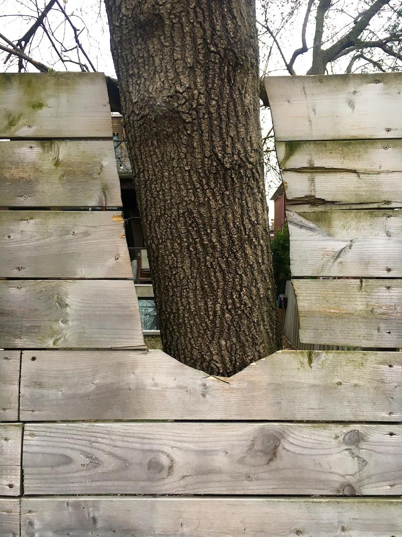 07_SAD_Tree_Dorner