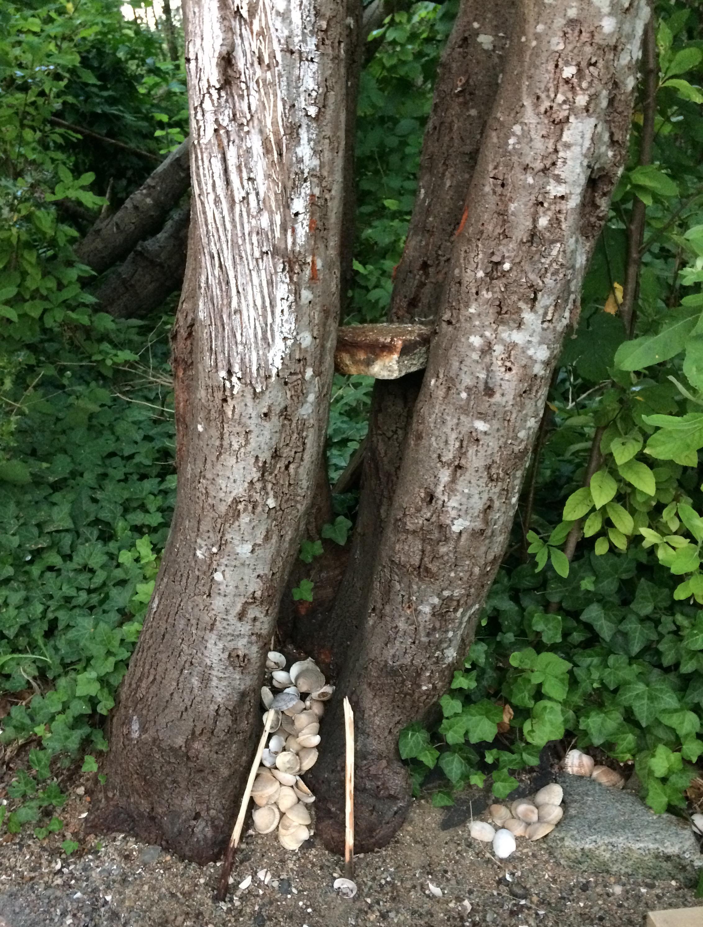 10_sg_tree_shells